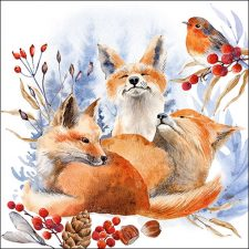 Fox & robin