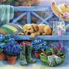 Dog sleep in the garden bench