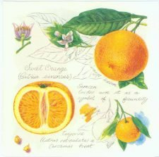 Decoupage Napkins of Oranges