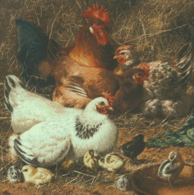 Decoupage Paper Napkins | Rooster Hens and Chicks | Chickens | Poultry Napkins | Bird Napkins | Farm Napkins | Paper Napkins for Decoupage