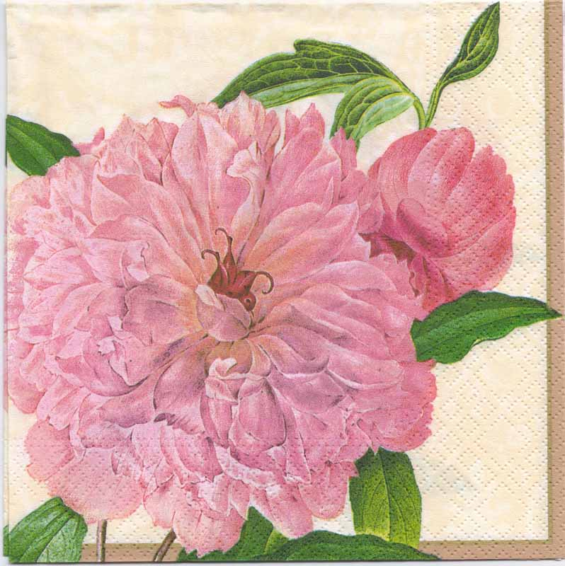 Decoupage Paper Napkins of Botanical Print of a Farmers Rose