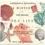 Decoupage Paper Napkins | Vintage Sea Life and Coral | Paper Napkins for Decoupage