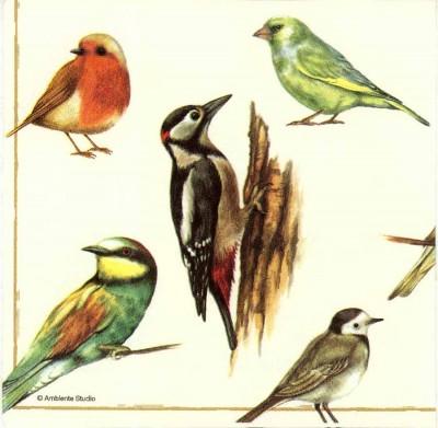 Decoupage Napkins | Birds of a Feather|Bird Napkins|Spring Napkins 2