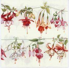 Event Paper Napkins of Red & White Fuchsias